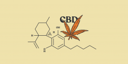 CBD Cannabidiol in the news